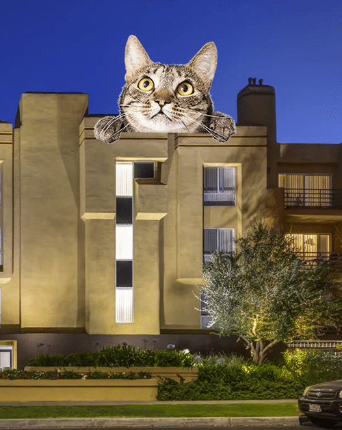 Apartments for Rent in Burbank pet friendly